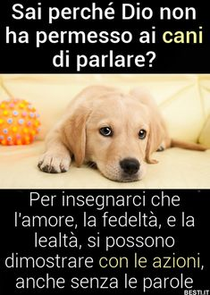 Sai perché Dio non lo permette - Animals And Pets, Funny Animals, Best Quotes, Life Quotes, Say Hi, Better Life, Love Of My Life, Ursula, Einstein