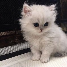 Cat Care Top Tips And Advice. All these things you get as a cat owner. Cute Baby Cats, Cute Little Animals, Cute Cats And Kittens, Cute Funny Animals, Kittens Cutest, Cute Animals Images, Pretty Cats, Beautiful Cats, Photo Chat