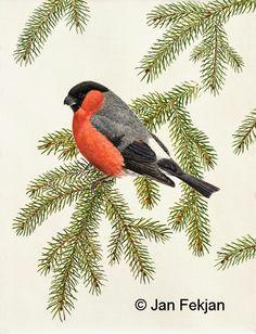 Jan Fekjan: Dompap Giclee Print, Rooster, Birds, Fine Art, Prints, Artist, Animals, Ideas, Animales