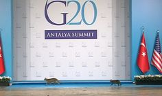 The G20 summit in Turkey had three unannounced guests on Sunday, as a group of cats took the main stage moments before leaders of the world's major economies were due to make an appearance