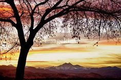 """""""Colorful November Sunset Sky and Longs Peak"""" by James """"BO"""" Insogna, Boulder / Longmont - Colorado - Boulder County // Colorful sunset with large tree and view of the front range of the Colorado Rocky Mountains Twin Peaks, Mount Meeker 13,911' and Longs Peak 14,256', Boulder County Colorado. Fine Art Colorado nature landscape... // Imagekind.com -- Buy stunning, museum-quality fine art prints, framed prints, and canvas prints directly from independent working artists and photographers."""