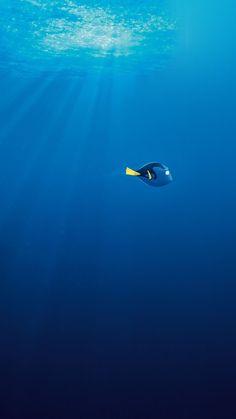 Buscando a Nemo.