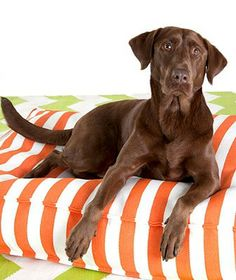 This dog pet is extremely durable yet lightweight and simple to clean, making it the perfect solution for living-room lounging or patio pampering.