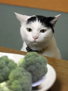 Umm...yeahhh...why would you humans wanna eat that fluffy green stuff??