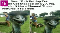 Perfectly Timed Pics That Will Make You Look Twice -Part 20 \\ Funny Pic. Perfectly Timed Photos, Zoo Animals, You Look, How To Plan, How To Make, Funny Pictures, Make It Yourself, Fanny Pics, Funny Pics