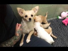 Mother dog reunited with puppies in heartwarming video