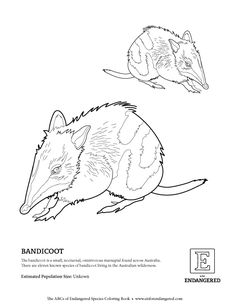 Free Download, Bandicoot — E is for Endangered
