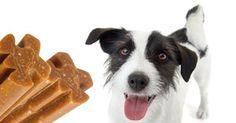 """Snack tossici per cani e gatti """"made in China"""": l'allarme dell'Enpa"""