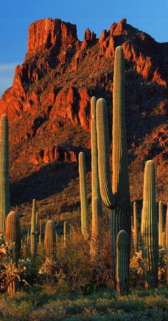 "✯ Sonoran Desert ✮✮Feel free to share on Pinterest"" ♥ღ www.FASHIONANDCLOthingblog.com"