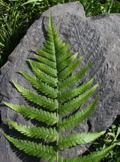 view environmental and natural resource