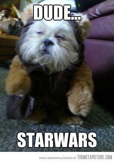 funny-dog-Ewok-look-alike-Star-Wars