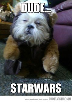 funny-dog-Ewok-look-alike-Star-Wars