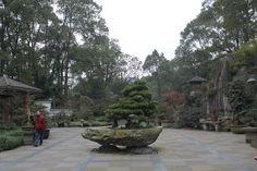 Bonsai Garden | Flickr - Photo Sharing! Bonsai Garden, Sidewalk, Japanese Gardens, Patio, Landscape, Outdoor Decor, Gardening, Kids, Gardens