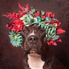 Pit Bull Flower Power  June Spring @ Instagram: https://www.instagram.com/junespringmultimedia/   #JuneSpring #Creative #Multimedia #PitBull #Photography