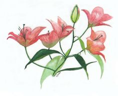 Watercolor. Lilies. Botanical Art, Lilies, Leaf Tattoos, Pencil Drawings, Painting & Drawing, Paintings, Watercolor, Flowers, Pen And Wash