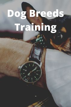 5 Simple Ways to Get Your Dog to Pay Attention Brain Training, Training Your Dog, Positive Reinforcement, Dog Runs, Treat Bags, Pay Attention, Simple Way, Animals And Pets, Dog Breeds