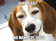 stoner dogs meme, 10 dog meme, funny dog memes, dog memes