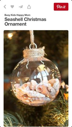 Make seashell Christmas ornaments this year! It's a fun craft that you can give to anyone. Seashell Christmas Ornaments, Coastal Christmas, Handmade Christmas, Christmas Holidays, Christmas Decorations, Photo Ornaments, Ornaments Ideas, Beach Christmas Ornaments, Clear Ornaments