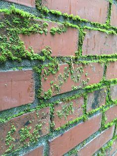 Laurel, Poppy and Pine: Brick Wall