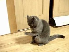 ▶ Cat is adorably dumbfounded over a wad of tape