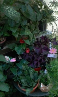 Sweet Home, Plants, House Beautiful, Plant, Planets