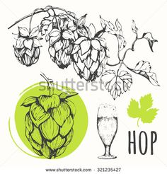 Hop set. Beer set. Vector illustration of branch of hops. Black and white. Sketch design.