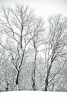 Google Image Result for http://fc3arch.files.wordpress.com/2011/01/dsc_0357-narnia-white-on-black-014a-framed.jpg