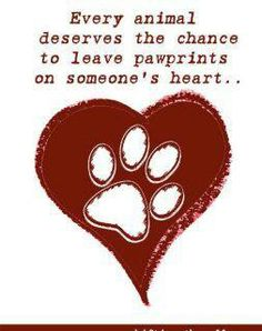 Every animal deserves the chance to leave pawprints on someone's heart...❤