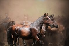 Wild horses (Equus ferus) at the Rapa das Bestas event in the Spanish village of Sabucedo, Galicia. Photograph: Miguel Vidal/Reuters