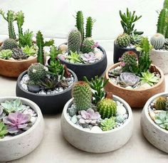 47 How To Make An Indoor Succulent Dish Garden is part of Indoor garden apartment You don& need to purchase accessories that cost a lot of money Trendy succulents are fun and simple to grow, makin - Succulent Arrangements, Cacti And Succulents, Planting Succulents, Cactus Plants, Cactus Terrarium, Terrarium Ideas, Cactus Flower, Succulent Display, Succulent Ideas