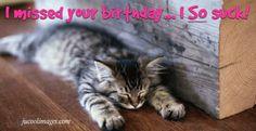 Kitten despondent Belated Birthday Greetings, Holiday Ecards, I Miss You, Cats, Animals, Gatos, Animales, Animaux, I Miss U