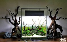 Aquascaping tank by Soner Can. Pin by Aqua Poolkoh Nano Aquarium, Nature Aquarium, Aquarium Design, Planted Aquarium, Aquarium Fish, Fish Aquariums, Aquarium Ideas, Aquascaping, Aquarium Driftwood