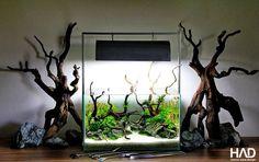 An idea for the smaller aquarium. #driftwood