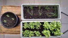 Como fazer uma horta em apartamento. Faça você mesmo!