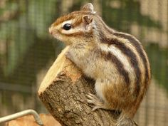 Baby squirrels | Squirrel Age and Development: Baby Squirrel Development ...