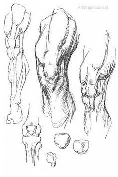 drawing knees, knee anatomy, art book