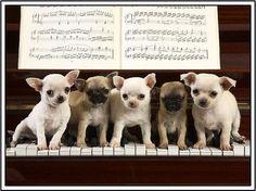 4 Dog Puppy Chihuahua Greeting Notecards/ van ASLICEINTIME op Etsy, $6.99