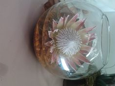 Fish bowl with King Protea
