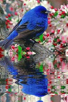 Blue Bird Ripple Reflection