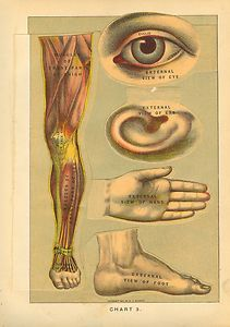 RARE 1902 Antique Human Anatomy Medical Print Multiple Layers Eyes Ear Hand Foot   eBay
