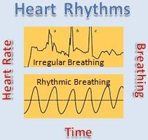 Discover how to relieve stress on your heart by managing your heart rhythms. This is a powerful way to heal your heart, relieve stress and achieve optimal heart health. Heart Diagram, Heart Care, Heart Rhythms, Brain Training, Body Systems, Heart And Mind, Physical Therapy, In A Heartbeat, How To Relieve Stress