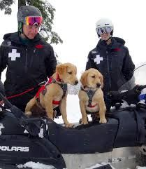 38 Best Avalanche Rescue Dogs Images Rescue Dogs