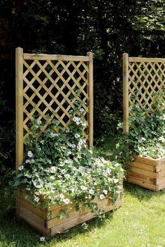 deux bacs à fleurs en lattes de bois avec des treillis en bois et fleurs grimpantes