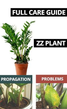 ZZ Plant (Zamioculcas Zamiifolia) Care Guide The is an awesome looking easy going and simple to care for. If you need some help or tips check out our guide. Zz Plant Care, Snake Plant Care, House Plant Care, Easy House Plants, House Plants Decor, Garden Plants, Potted Plants, Outdoor Plants, Indoor Outdoor