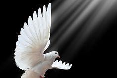 MI RINCON ESPIRITUAL: Pentecostés. El Espíritu Santo en mi vida  By Padr...