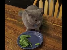 Funny Videos 2015 - Funny Smart Cat Don't Want To Eat Salad - YouTube