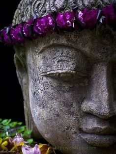 """The greatest impurity is ignorance. Free yourself from it. Be pure."" ~ Buddha"