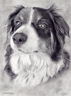 We have seen the dog paintings, now go through our collection of dog colour pencil drawings for your inspiration. Description from webneel.com. I searched for this on bing.com/images