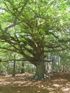 English tree Summer Trees, Colour Red, Fresh Green, Climbing, Favorite Color, Turning, Hug, Woods, Walking