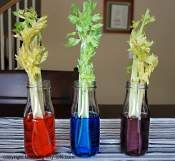 An exciting science experiment for children of any age.  Make predication, watch for changes, document your findings...